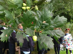 P1-4 on Tree Hunt In School Grounds